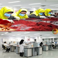 Iranian saffron producer company with advance manufacture technolgy